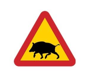 SWE pozor divoká prasata